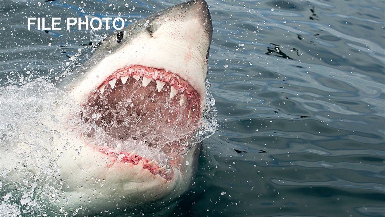 Man attacked by great white shark while swimming in Half Moon Bay
