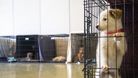 14 adorable puppies arrive to the Bay Area via plane from Colorado