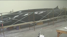Massive whale structure returns to Lawrence Hall of Science
