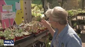 Triple-digit heat and water restrictions push Bay Area gardeners to ditch their thirsty plants