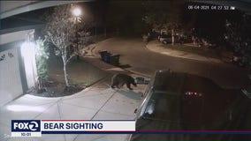 Home surveillance camera catches a bear wandering around Oakley neighborhood