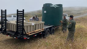 Water troughs set up in Marin County to help tule elk stay alive through drought