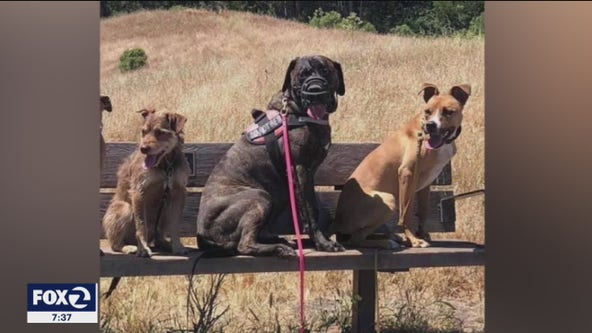 Stolen dogs reunited with owners thanks to social media, aware residents