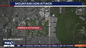 Officials warn Solano County residents about mountain lion who attacked several animals