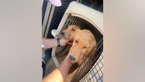Stolen puppies OK after Hayward carjacking, crash