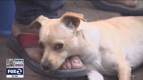 Fremont company helps save homeless man's puppy