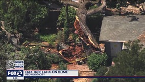 Large oak tree falls on home in Redwood City
