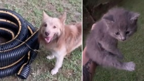 Dog rescues kitten trapped in hose in Georgia back yard
