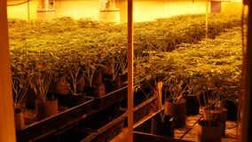 Union City police bust marijuana growing operation valued at up to $11 million