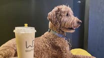 Woof's Bar is a pet-friendly spot for boba drinks and Instagrammable photos