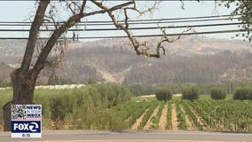 Napa County vintners form plans to protect vineyards against wildfires