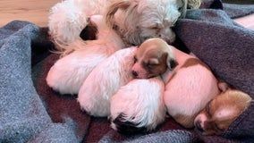 Coast Guard, Marin County firefighters rescue man with litter of puppies after boat runs aground