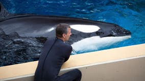 6-year-old killer whale dies suddenly at SeaWorld San Diego