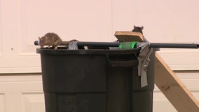 Arizona neighborhood dealing with rat infestation after woman was found dead inside home with hoarding issue
