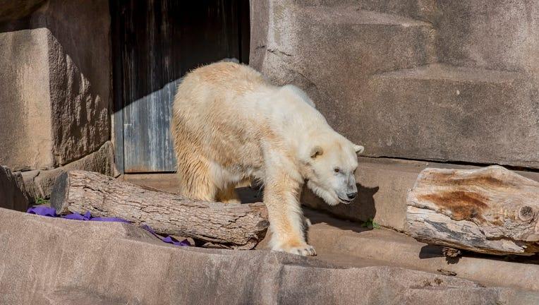 Polar Bear Snow Lily 36 Bday 11-2020-0100129 E