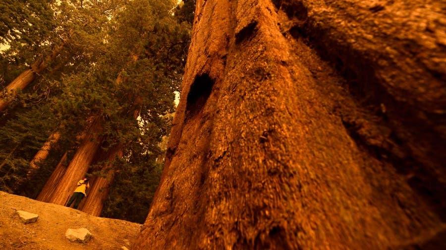 Wildfires make run toward giant sequoia groves in the Sierra Nevada