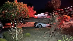 Wind toppled tree brings down power lines, smashes cars near Half Moon Bay