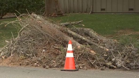 Tree trimmer killed in accidental fall outside Moraga Country Club