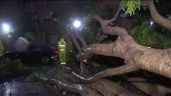 Massive tree falls in San Francisco's Pacific Heights neighborhood
