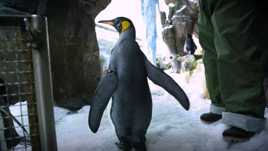 donna-king-penguin3.jpg