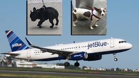 JetBlue restricting support animals