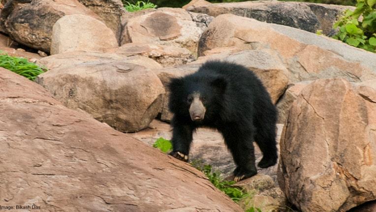 3a4417e2-Bear stock photo by Bikash Das via Flickr-404023