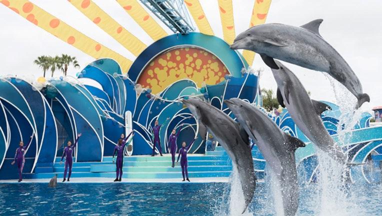 87972e48-Dolpin-Days-SeaWorld_1488502329418-402429.jpg