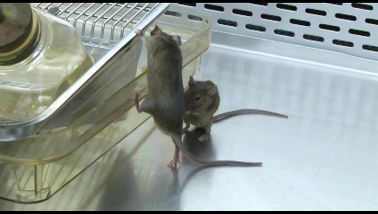 c283798a-MICE_1517852710323-408795.png