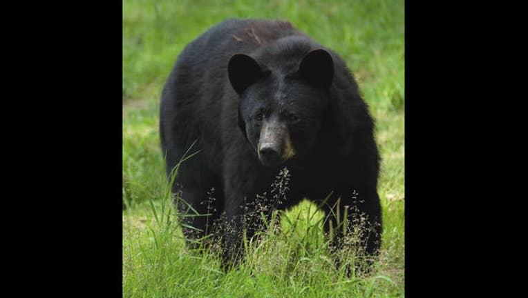 5d324870-bear_grass_1450362366656.jpg