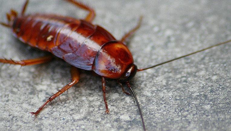 7f131ddb-cockroach_1473866070491-404023.jpg