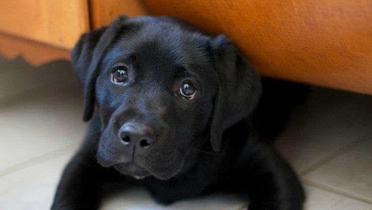 cute-ass-puppy-dog_1487766891007-404023.jpg