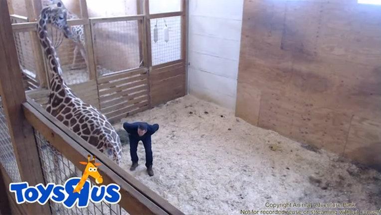 giraffe check_1490710488315-401385.jpg
