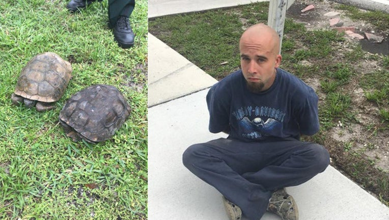 e504d442-martin county tortoise arrest_1526988045868.jpg-401385.jpg