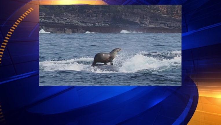 8927d902-seal-whale_1442493640250-404023.jpg