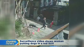 Woman charged after dogs are stolen from Bronx driveway