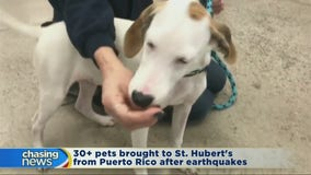 Pets from Puerto Rico ready for adoption
