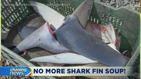 Murphy signs bill making shark fin soup illegal