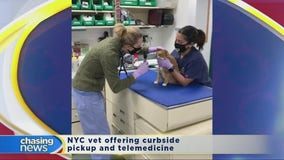 How to care for your furry friend during the coronavirus outbreak