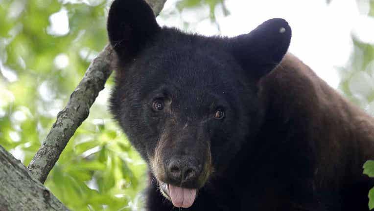 bearsAP1_1444928333426_358723_ver1.0.jpg