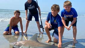 12-year-old reels in shark on NJ beach as crowd watches in awe