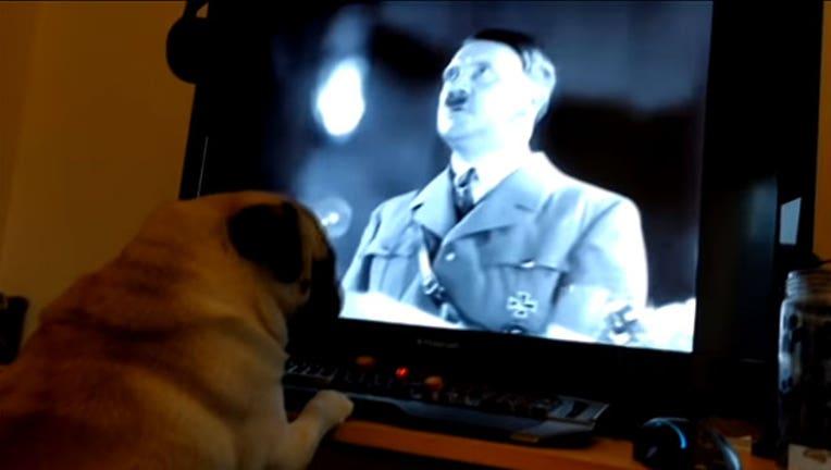 6b9ded04-nazi-dog_1524501814726.jpg