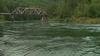 2 men drown in Skykomish River near Gold Bar