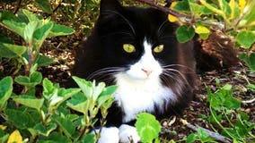 'Horrendous': Pet cat found cut in half in Port Angeles park