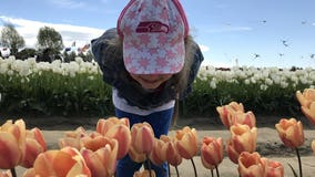 Tulip Festival: When is peak bloom, how to get there & other details to plan your trip
