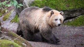 Point Defiance Zoo animals keeping cool during heat wave