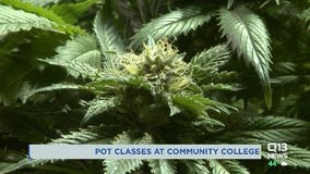 Tacoma Community College to offer 'comprehensive' courses in cannabis