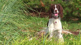 Meet Hotel Bellwether's canine concierge, Bella!