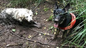 Search dog rescues dog trapped mud for two days