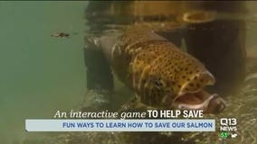 Survive the Sound: Interactive game shows salmon's fight for survival