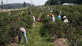 Berry grower to pay $350K for manager assaults on employees